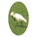 Eurasian Spoonbill Oval Sticker