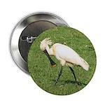 Eurasian Spoonbill 2.25