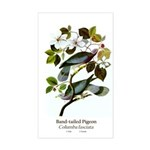 Band-tailed Pigeon Rectangle Sticker