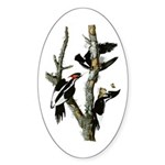 Ivory-billed Woodpecker Oval Sticker
