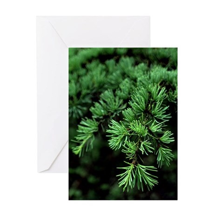Pine Needles Greeting Card