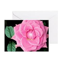 Bright Pink Rose Greeting Card