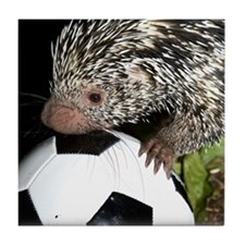 Porcupine With Soccer Ball Tile Coaster