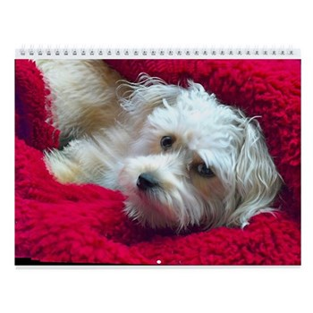 Sasha calendar