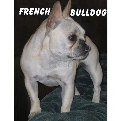french bulldog height elie tahari fall 2011 photo 1 pictures cbs news 2994